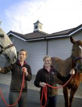 QC Stables